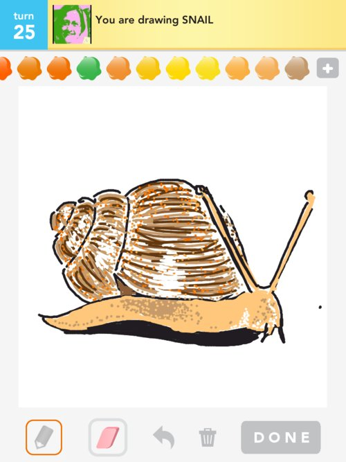 Snail drawings how to draw snail in draw something the for How do you draw a snail