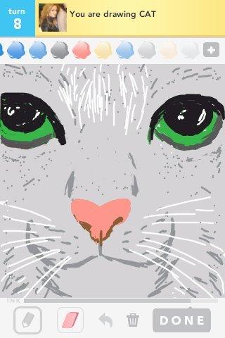 Cat_ds