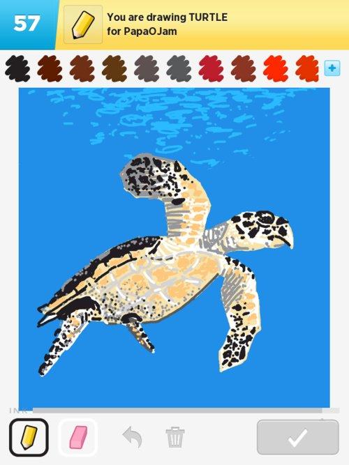 Qikdr4w-turtle