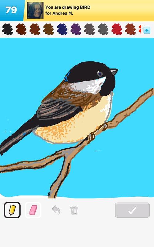 A_bird