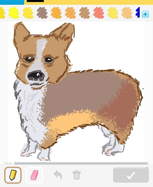 Corgi