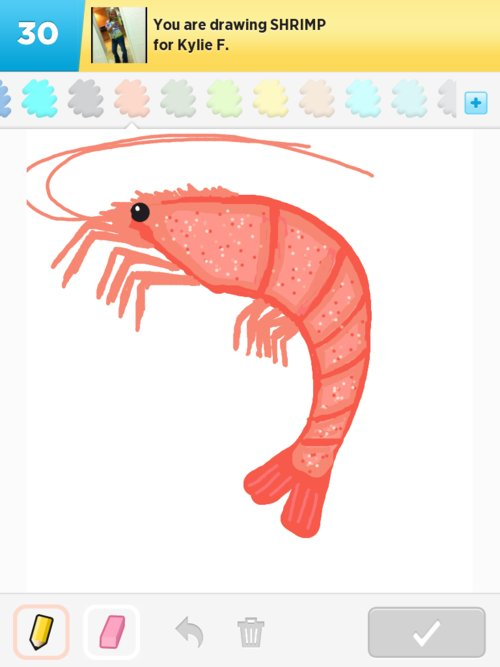 Shrimp drawing