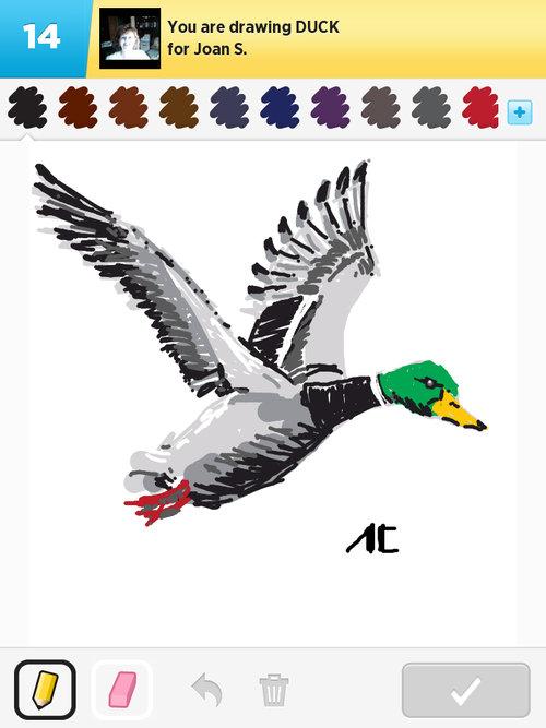 Qikdr4w-duck