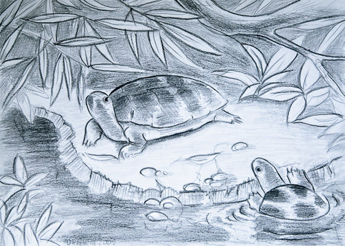 Turtles_drawing_zoo_2009_portfolio