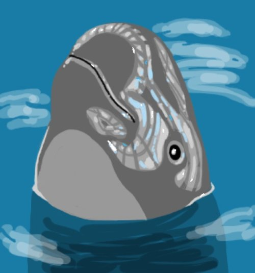 how to draw a porpoise