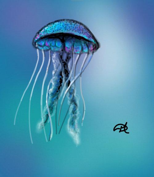 Stuff_jellyfish
