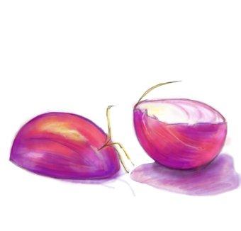 Onion_drawing