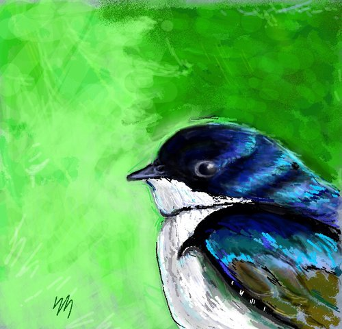 Swallow_drawing_image-1