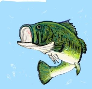 how to draw a bass