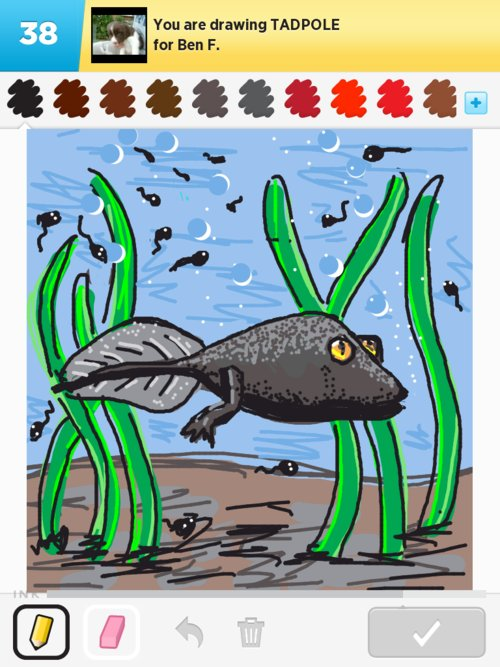 Tadpole Drawings - How to Draw Tadpole in Draw Something ...