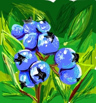 Blueberry Drawings - How to Draw Blueberry in Draw ...